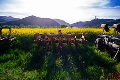 Welcome spring (Un ragazzo chiamato Bi) Tags: flowers lake primavera backlight lago spring sony 28mm 7 flare fields om alpha zuiko a7 colza f20 fioritura piediluco