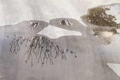 Reflejos (Juana Prez) Tags: rain puddle mirror spring nikon dream reflejos reflexe d3000s
