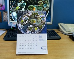 Day 4 Back to work (c-mitchell39) Tags: work calendar january mould microbiology petridish mouldy mouldculture