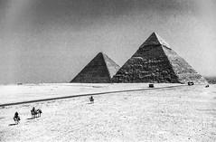 Der Weg in die Wüste / The Road into the Desert (chrisar676) Tags: blackandwhite bw analog blackwhite pyramid scanner egypt scan camel reiter sw rider camels pyramide analogphotography ägypten kamel kodakgold100 riders gizeh chephren pyramides pyramiden egy kamele schwarzweis analogefotografie canoncanoscan9000fmarkii