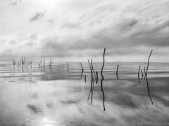 Morning Reflections At Phatthalung Lake (spanjavan) Tags: morning travel sky bw sunlight lake reflection clouds thailand mono sticks nikon cloudy calm southern d750 phatthalung