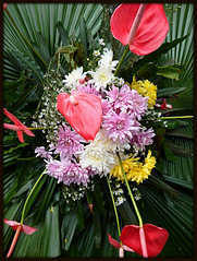 Flower arrangement (STEHOUWER AND RECIO) Tags: flower flowers flora arrangement red white yellow pink green tropic tropical leaves anthurium lakanthurium araceae bloemen bloem boeket bouqet rood wit geel roze groen tropisch bladeren plant plants planten philippines bulaklak dilaw kulayrosas puti pula palumpon tropiko dahon halaman filipinas pilipinas filipijnen bloemschikken bloemschikkunst southeastasia asia island philippine photo photography capture image