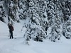 tourists skiing in Peter Lougheed Park (Gillian Walker) Tags: park kananaskis skiing crosscountry peter alberta lougheed
