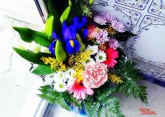 __ FLORES PARA EL PRIMER JUEVES DE  FEBRERO__ (Marian Vzquez) Tags: ramo plantasyflores