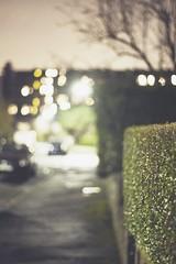 Dat bokeh (ediblemanager) Tags: night scotland fuji bokeh dundee hedge miranda xe1 om24mmf28