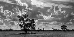 Drama in the Skye (benson.ruth30) Tags: new tree nature weather wales clouds landscape outdoors nikon south australia d610
