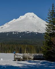 Mt Hood from Trillium Lake -9628 (NWPaddler) Tags: winter mountain snow mountains oregon landscape trillium nikon skiing outdoor bluesky cascades mthood xcski trilliumlake crosscountryski 2016 mthoodoregon