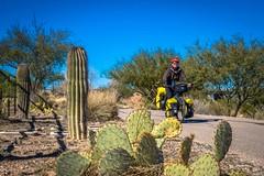 Cycling the Julian Wash Greenway in Tucson, Arizona.