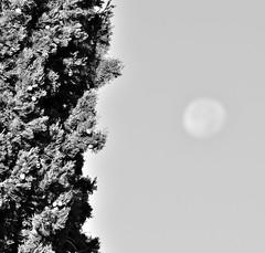 empres i Mjesec (roksoslav) Tags: morning moon nikon cypress bra 2015 postira jutro mjesec empres afsnikkor70300mmf4556vr d5100