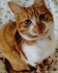 Sat, Dec 5th, 2015 Lost Female Cat - Cabra Road, Dublin (Lost and Found Pets Ireland) Tags: road dublin cat lost december cabra 2015 lostcatcabraroaddublin