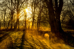 Dream Awake (der_peste (busy)) Tags: christmas bridge trees light sunset shadow sun mist nature water colors silhouette misty fog zeiss sunrise germany bayern deutschland bavaria wasser nebel sony foggy brcke bume sonnenaufgang a7 ambiance sonya7 fe55f18z 12242015