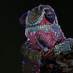 Alien (hehaden2) Tags: square reptile chameleon bournemouth pantherchameleon furciferpardalis captivelight topazglow