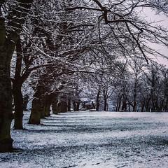 Segment of panorama uploaded to #flickr - www.Flickr.com/DanDeeTV #Leeds #snow #Snowing #Snowy #PhotoOfTheDay #britain #trees #landscapes #instasnow #landscape #natural #wintry #natureza #weather #snowofinstagram #igersleeds #IG_England #iloveleeds #Schne (DanDeeTV) Tags: square squareformat mayfair iphoneography instagramapp uploaded:by=instagram