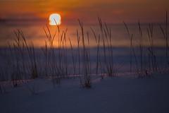 Just One Last Dance (MilaMai) Tags: ocean winter sunset sea sun snow plant beach nature grass closeup clouds suomi finland landscape focus outdoor dusk horizon dry blurred serene redsky hay shining shiningthrough lowangle pori sooc tamron70200 milamai