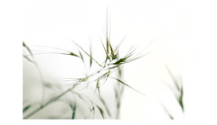 S u b e s p a c i o s   6 (creonte05) Tags: chile blackandwhite naturaleza art blancoynegro nature photoshop nikon flickr arte minimal minimalista 2016 d7100 eduardomiranda