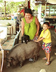 convenience store pig (the foreign photographer - ฝรั่งถ่) Tags: boy lady canon thailand pig store kiss vietnamese bangkok convenience khlong bangkhen thanon 400d