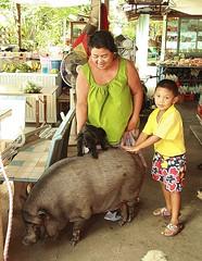 convenience store pig (the foreign photographer - ) Tags: boy lady canon thailand pig store kiss vietnamese bangkok convenience khlong bangkhen thanon 400d