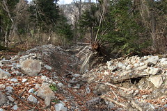 sauvagerie (bulbocode909) Tags: suisse arbres rochers valais fully ravines forts couledeboue