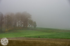 Field (sylvester-ch) Tags: autumn trees brown green colors yellow fog fauna forest flora flickr nebel laub herbst pflanzen gelb grn braun wald bltter farben