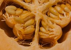 (mblaeck) Tags: orange macro closeup fruit honeydew seeds cantaloupe muskmelon cantelope 105mm cantaloup rockmelon 105mmmacro mushmelon sweetmelon spanspek persianmelon