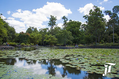 Pond with Water Lillies (jadyn2014) Tags: trees clouds outdoors daylight pond botanicalgardens waterlillies mountcoottha nikond750