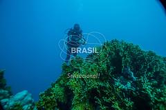 NE_Abrolhos0023 (Visit Brasil) Tags: horizontal brasil retrato natureza mergulho bahia esporte nordeste aventura externa abrolhos subaqutica comgente diurna