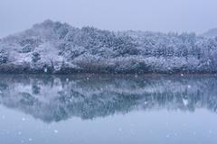 Reflection of snow (kurumaebi) Tags: snow nature landscape nikon d750 yamaguchi 雪 秋穂 山口市 reflection冬