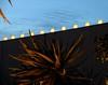 Desert Botanical Garden – Phoenix, AZ (studioferullo) Tags: arizona phoenix garden botanical luminaria desertbotanicalgarden desertgarden dbg