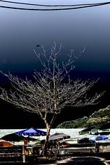 20160117_2788_1024(1) (Raimundo Arrosi) Tags: infravermelho infraredfilm