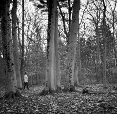 beeches in chase woodlands (postylem) Tags: boston kodak massachusetts trix 400tx agfa isolette r5 tf5 photographersformulary monobath new55