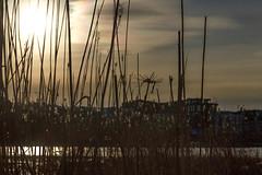 StrawDraw (BigWhitePelican) Tags: sun finland helsinki silhouettes april straws 2016 canoneos7d adobelightroom4