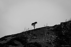 Lost battle. (Instagram: @meridiophotography) Tags: maxkettner canon 7d kettner tamron ireland irlanda blackandwhite blancoynegro blackwhite bw tree wood lonelyness soledad clima planeta planet earth mankind meridiophotography