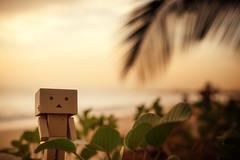 Danbo-02:16 (Marc Egensperger) Tags: sun beach nikon plage solei danbo d700 danboard