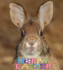 Happy Easter (Phiddy1) Tags: ontario rabbit bunny animals whitby hallsroad