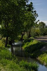 Roggia a Barbavara (coachgodzup1) Tags: italy tree green water canal nikon lombardia lomellina lombardy roggia d3100 nikond3100