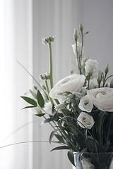 (Tunde Molnar) Tags: stilllife flower monochrome mood pastel ikebana indoor pale whitebackground bouquet wildflower
