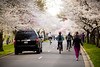 2016 03 26 - 1049 - DC - Cherry Blossoms (thisisbossi) Tags: flowers trees usa streets southwest bicycling washingtondc dc unitedstates pedestrians sakura sw cherryblossoms roads bicyclists floweringtrees hainspoint sharedspace