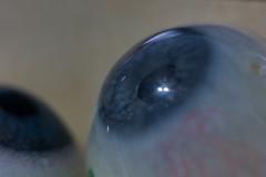 MacroMondays_Two 020 (VinceFL) Tags: blue two blueeyes manfrottotripod nikonmll3 brunswickga afsdxmicronikkor85mmf35gedvr nikond7100 vincefl macromondaystwo