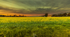 Sunset in Milpitas, California (Rohit KC Photography) Tags: california ca sunset orange house green field grass yellow clouds canon dark landscape evening warm distorted dusk edited bushes milpitas canon24105mmf4l canon5dmarkii