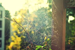 And from the sun, there comes something wild... (catarinae) Tags: from old light wild sun home germany that outside deutschland for spider you balcony web an will empire there create comes something