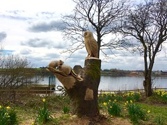 Tree carving Holllingworth Lake (garlick.rachel) Tags: wood lake tree art water mouse carving carve owl
