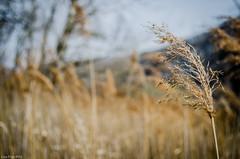 Fili e speranze (Luca Frigo) Tags: trees alberi lago natura lamar pontile terlago