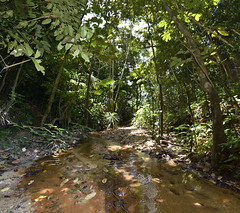A river in the jungle (joxeankoret) Tags: river singapore reservoir mangrove jungle wetland macritchie