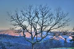 Waterrock Tree (esywlkr) Tags: tree nature silhouette landscape nc northcarolina blueridgeparkway wnc waterrockknob