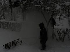 Winter in the park (cod_gabriel) Tags: winter romania sleigh bucharest bucuresti sledge bukarest roumanie boekarest bucarest iarna romnia bucureti sanie iarn bazilescu bucareste parculbazilescu parcbazilescu sniu