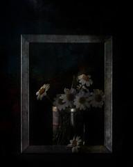 En distintas realidades (saparmo) Tags: stilllife dark still bowl bodegn frame daisy margarita marco margaritas bodegon daisys oscuro jarrn seleccionar