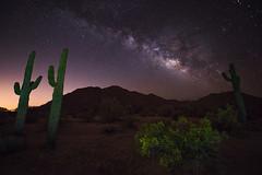 Celestial Saguaro (T. Morris) Tags: longexposure arizona cactus lightpainting nature cacti stars landscape desert astrophotography nightsky saguaro sonorandesert creosote milkyway naturephotography landscapephotography sonorandesertnationalmonument nikond810 northmaricopamountains
