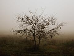 (Walter Daniel Fuhrmann) Tags: winter tree field fog rbol campo invierno niebla