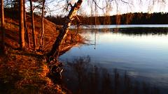 Waiting for the first dip? (mpersson60) Tags: sea spring sweden sverige solna hav vr brunnsviken
