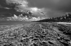 Brazil - Tamandar (Nailton Barbosa) Tags: brazil praia beach brasil de mar nikon bresil brasilien pe litoral pernambuco brasile oceano nordeste brsil coqueiros carneiros tamandar arrecifes coqueiral d80